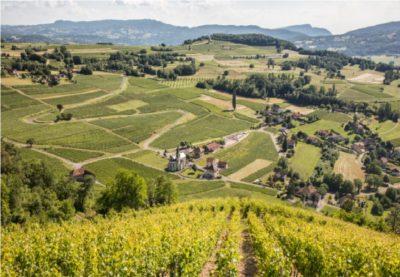 Exposition Vignes, paysages et vignerons